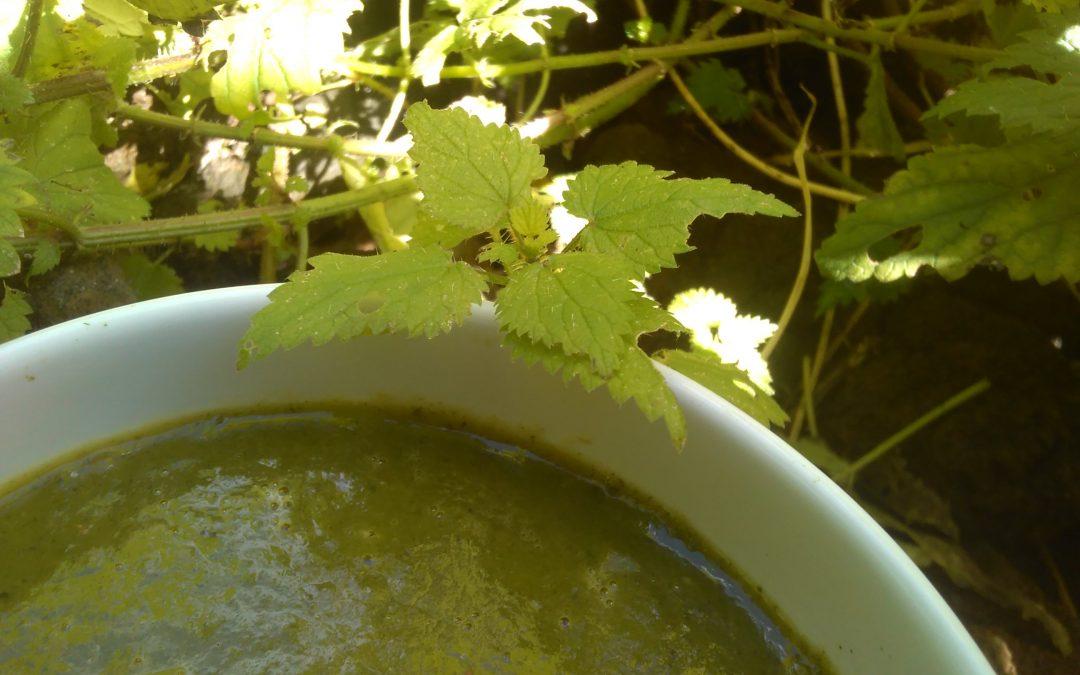 Nettle…Soup!
